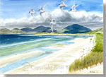 fine art print from watercolour painting of Arctic Terns at Luskentyre on the Isle of Harris, Scotland, by Peter Thwaites