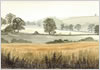 Cornfield, fine art print from watercolour by Peter Thwaites
