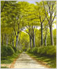 West Drive, Boconnoc, prints from watercolour painting by Peter Thwaites