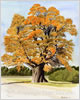 Dorset Oak, giclee print from watercolour painting by Peter Thwaites