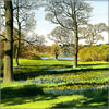 Daffodil Meadow, Exbury Gardens, greetings card