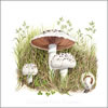 Field Mushrooms, greetings card