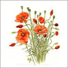Field Poppies, greetings card