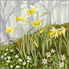 Lent Lilies, greetings card