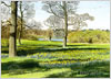 Daffodil Meadow, Exbury Gardens, giclee print from watercolour painting by Peter Thwaites
