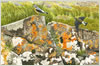 Wheatears on Ardnamurchan, giclee print from watercolour painting by Peter Thwaites