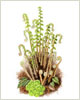 Spring ferns, printed from watercolour painting by Peter Thwaites